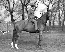 FM  Alexander on Horse